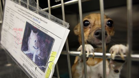 Pet store operators will face $500 per animal penalties for breaching the act.