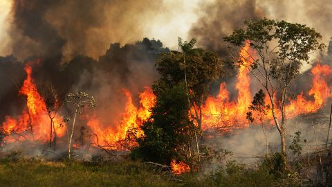 A fire burns trees next to grazing land in the Amazon basin on November 22,  in Ze Doca, Brazil, 2014. Fires are often set to clear forest for grazing land.