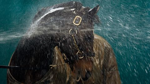 """Another picture that has defined his career is this shot of the great stallion Danehill being hosed down at  Coolmore Stud in Ireland in 2003. """"I just love the whole effect, how the water is reacting over the horse. He turns his neck so it was almost like a massage to him, and you can see how much he's enjoying it. I had to shoot it on a slow shutter speed and there's a real sense of movement in the water, and the light is just lovely.""""<br />"""