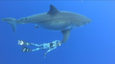 Diver Ocean Ramsey swims with a great white shark.