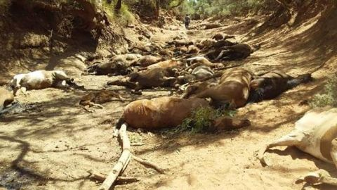 The bodies of dozens of wild horses were found in a dried-up waterhole in Northern Territory, Australia.