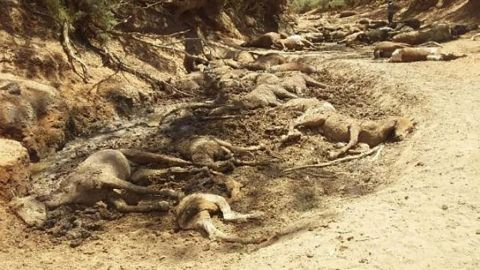 The wild horses died of thirst.