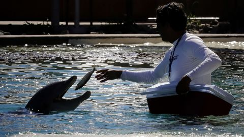 After the death of a fourth dolphin, Dolphinaris Arizona, a Scottsdale aquatic facility, announced that it will temporarily close for a reevaluation by an outside panel of experts.