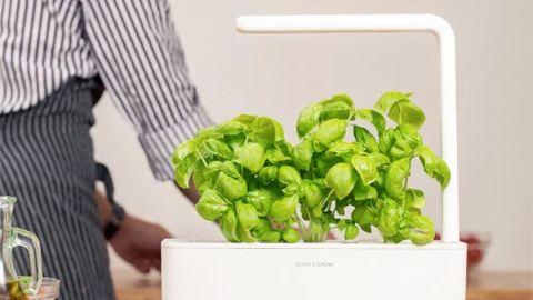 """<strong>Click & Grow Smart Garden ($99.95; </strong><a href=""""https://www.thegrommet.com/kitchen-bar/smart-garden"""" target=""""_blank"""" target=""""_blank""""><strong>thegrommet.com</strong></a><strong>) </strong>"""
