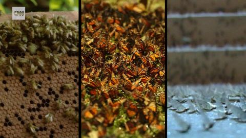 new study plunging insect populations GE lon orig_00000000.jpg