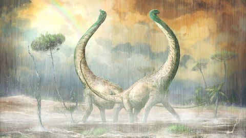 """An artist's illustration of Mnyamawamtuka moyowamkia, a long-necked titanosaur from the middle Cretaceous period recently found in Tanzania. Its tail vertebra has a unique heart shape, which contributed to its name. In Swahili, the name translates to """"animal of the Mtuka with a heart-shaped tail."""""""