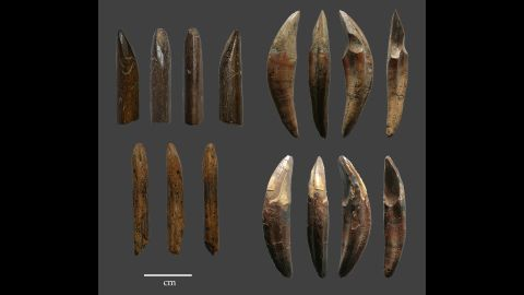 Examples of tools manufactured from monkey bones and teeth recovered from the Late Pleistocene layers of Fa-Hien Lena Cave in Sri Lanka show that early humans used sophisticated techniques to hunt monkeys and squirrels.