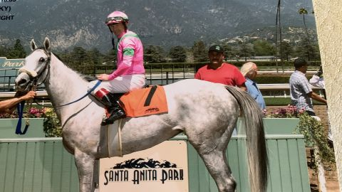 Let's Light The Way became the 21st horse to die at Santa Anita Park this season.