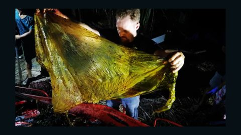 Darrell Blatchley, above, found around 40 kilograms of rice sacks, grocery bags, banana plantation bags and general plastic bags in the stomach of the whale.