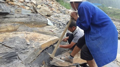 Researchers discovered unknown species at the Qingjiang fossil site on the bank of the Danshui River, near its junction with the Qingjiang River in Hubei Province, China.