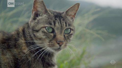 taiwan cat village houtong travel orig_00003918.jpg