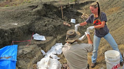 Robert DePalma (L) and field assistant Kylie Ruble (R) excavate fossil carcasses from the Tanis deposit in North Dakota.