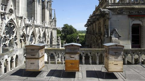 The beekeeper Nicolas Geant settled three hives on the roof of the sacristy of Notre Dame.