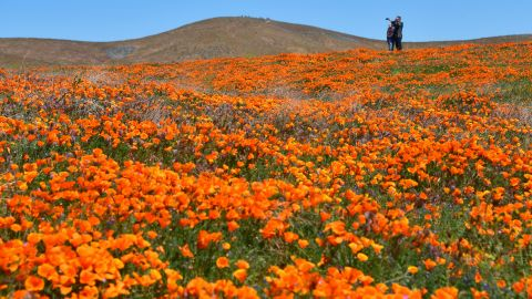 """<strong>Lancaster, California:</strong> A particularly wet winter season led to a """"superbloom"""" of orange poppies and other wildflowers across California hills in April."""