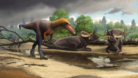 Reconstruction of a small tyrannosauroid Suskityrannus hazelae from the Late Cretaceous.