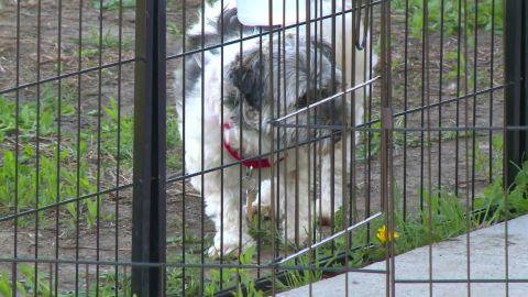An Iowa animal rescue organization said it has quarantined 32 dogs.