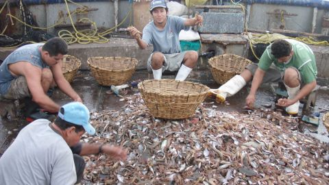 Fishermen sort through the haul on a Mexican trawler.