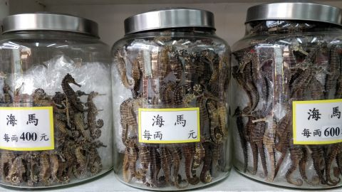 Higher prices are charged for seahorses which are large, pale and smooth-skinned.