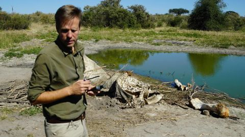 Mike Chase investigates a fresh elephant carcass.