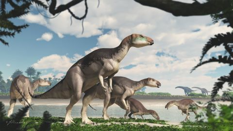 This is an artist's illustration of the newly discovered dinosaur species Fostoria dhimbangunmal.