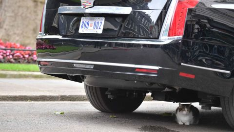Larry, the No. 10 Downing Street cat, sits underneath The Beast, the presidential armored Cadillac.