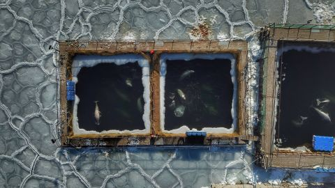 In this aerial view taken on January 22, 2019, captured marine mammals are seen in enclosures at a holding facility in Srednyaya Bay in the Far Eastern town of Nakhodka.