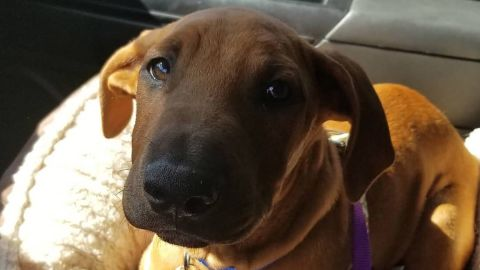 """""""Sullivan"""" was adopted by the dispatcher who was working the channel when Sacramento Police Department officer Tara O'Sullivan was shot, police said"""