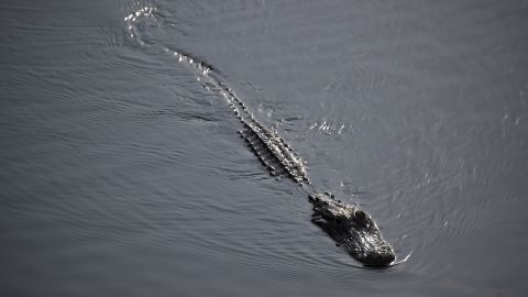 An autopsy found a South Carolina man died from natural causes, not from alligator wounds.