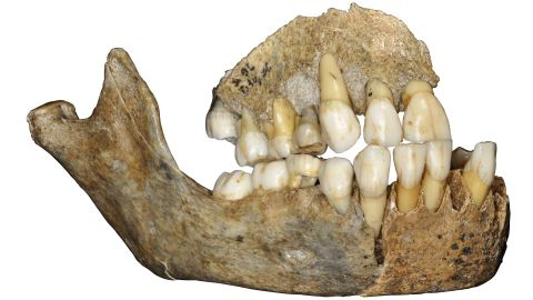 This jawbone belonged to a Neanderthal girl who lived 120,000 years ago. It was found in Scladina Cave in Belgium.