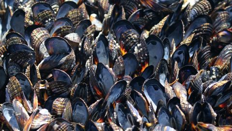 A research coordinator estimates tens of thousands of mussels have died in the Bodega Bay area due to high area temperatures.