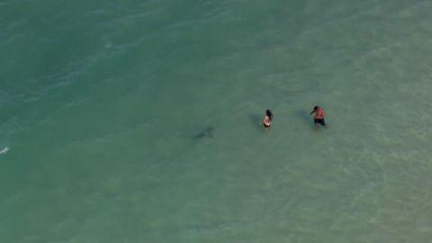 A shark swims near swimmers on Monday at Daytona Beach, Florida.