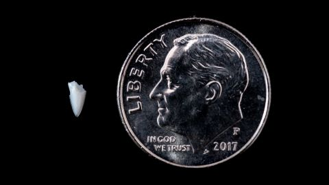 Scientists weren't sure that they would be able to extract DNA from the tiny shark tooth fragment that had been embedded in a surfer's leg since 1994.