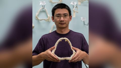 Lei Yang holds the jaw of a blacktip shark, which is similar to the shark that bit the surfer in 1994.