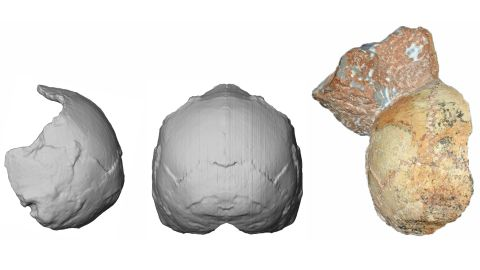 The back of a skull found in a Grecian cave has been dated to 210,000 years ago. Known as Apidima 1, right, researchers were able to scan and re-create it (middle and left). The rounded shape of Apidima 1 is a unique feature of modern humans and contrasts sharply with Neanderthals and their ancestors.