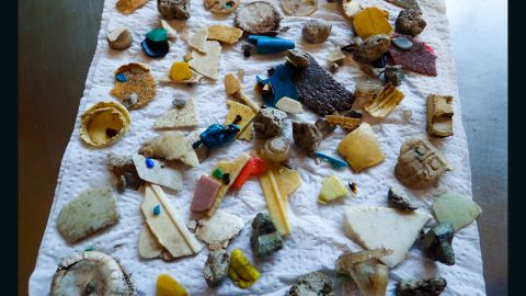 A collection of plastic shards found inside the seabirds studied.