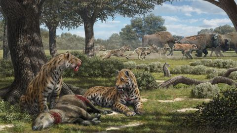 Saber-toothed cats, dire wolves and coyotes had different hunting patterns according to a new study of predator fossils found in the La Brea Tar Pits.