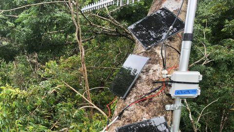 Rainforest Connection's devices, high in the canopy.
