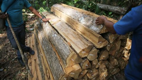 Members of the Ka'apor indigenous tribe inspect illegal logging found on their protected land in Brazil.