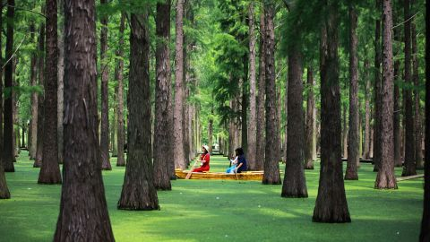 <strong>Yangzhou, China: </strong>Tourists sail past redwood trees in Yangzhou's Water Forest in eastern China's Jiangsu province.