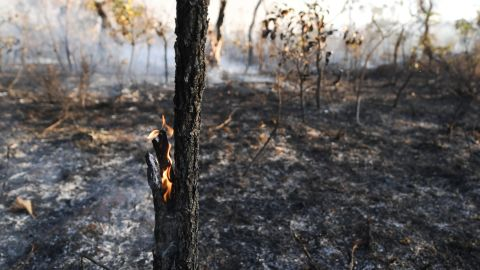 View of the devastation caused by a forest fire in the northern area of Brasilia's National Park (PNB), in Brasilia on August 30, 2017. The PNB extends through 42,000 hectares amid Brasilia's urban area, where no rain has fallen in 100 days and the relative air humidity reaches 10%.   / AFP PHOTO / EVARISTO SA / EVARISTO SA        (Photo credit should read EVARISTO SA/AFP/Getty Images)
