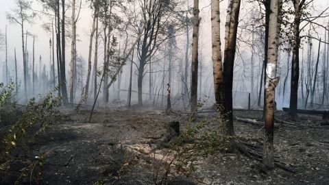 In this photo taken Sunday, Aug. 18, 2019, provided by the Alaska Division of Forestry, are burned trees after the McKinley Fire burned through the area near Willow, Alaska. The main highway in Alaska that connects Anchorage and Fairbanks has reopened on a limited basis. A wildfire north of Willow jumped the Parks Highway on Sunday night, prompting a closure for a 9-mile stretch. The state Division of Forestry says one lane of traffic reopened at 8 a.m. Monday. (Maureen Clark/Alaska Division of Forestry via AP)