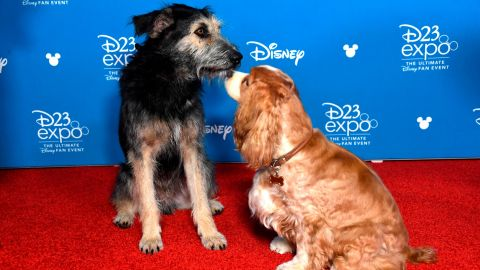 Disney+ will debut a live-action remake of 'Lady and the Tramp'
