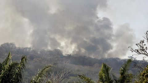 Wildfires have decimated large areas of Bolivia's rainforest.