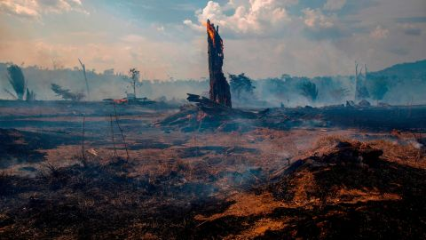 View of a burnt area of forest in Altamira, Para state, Brazil, on August 27, 2019. - Brazil will accept foreign aid to help fight fires in the Amazon rainforest on the condition the Latin American country controls the money, the president's spokesman said Tuesday. (Photo by Joao Laet / AFP)        (Photo credit should read JOAO LAET/AFP/Getty Images)