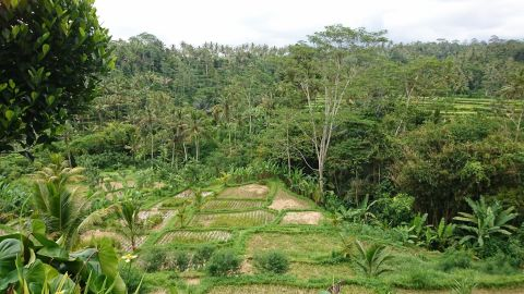 Human transformation of slopes for rice farming, in Ubud, Bali.