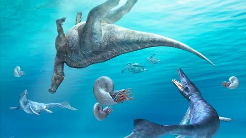 Carcass of Kamuysaurus, floating in the sea with two mosasaurs, two sea turtles, and four ammonoids.