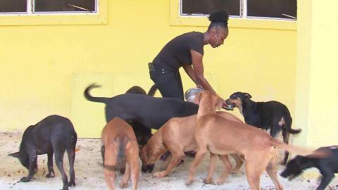 animal shelter freeport bahamas valdes pkg vpx _00001407.jpg