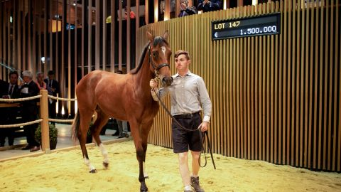 TOPSHOT - A yearling colt sired by Galileo and Prudente of the Ecuries des Monceaux stables, bought for 1 500 000 euros (1?664?479 US dollars) is presented during the yearling sales, one of the world renowned annual thoroughbred horse sales, in Deauville on August 18, 2019. - This year's prestigious yearlings auction started on August 17, in France's Normandy seaside resort of Deauville, a very popular venue for horse owners from around the world. (Photo by LOU BENOIST / AFP)        (Photo credit should read LOU BENOIST/AFP/Getty Images)