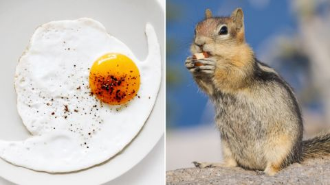 As you sprinkle that pepper on your morning eggs, try not to think about the fact you may be eating more than 40 insect fragments with every teaspoon, along with a smidgen of rodent hair.