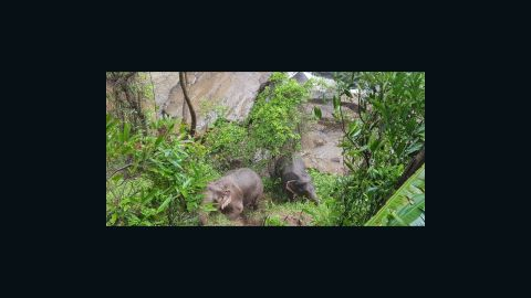 Two elephants were rescued after six others died at a waterfall in Thailand.